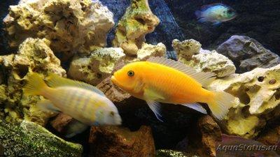 Помогите опознать рыбку опознание рыб  - WhatsApp Image 2019-01-02 at 22.06.19.jpeg