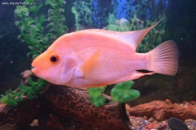 Помогите опознать рыбку опознание рыб  - DSC_1434.JPG
