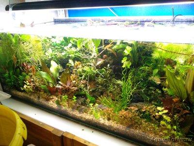Обростают стенки аквариума - IMG_20190216_125758.jpg