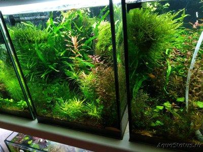 Обростают стенки аквариума - IMG_20190216_125741.jpg