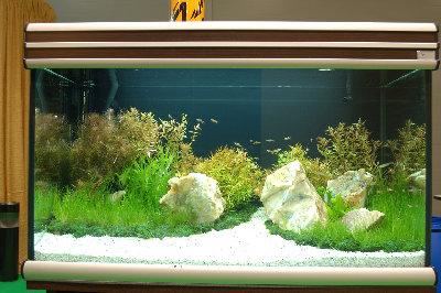 Мой аквариум на конкурсе аквадизайна Зоосфера 150 литров cdda  - DSC_2587.jpg