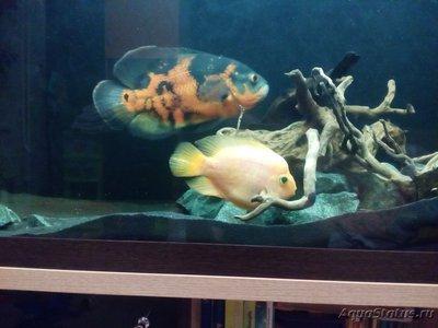 Помогите опознать рыбку опознание рыб  - 1552417457245921718294.jpg