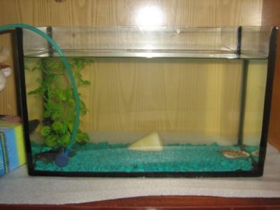 аквариум - огороде 016.jpg