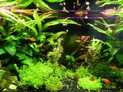 Кислотность ph и жесткость gh, kh воды в аквариуме - DSCN0362.JPG