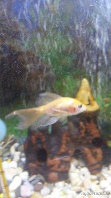 Определение и диагностика болезней у аквариумных рыб - 20190329_182626.jpg