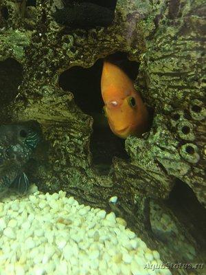 Определение и диагностика болезней у аквариумных рыб - image.jpg