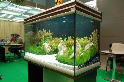 Мой аквариум на конкурсе аквадизайна Зоосфера 150 литров cdda  - DSC_2590.jpg