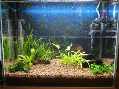 Мой аквариум 35 литров Студентка  - (2) аквас 002.jpg