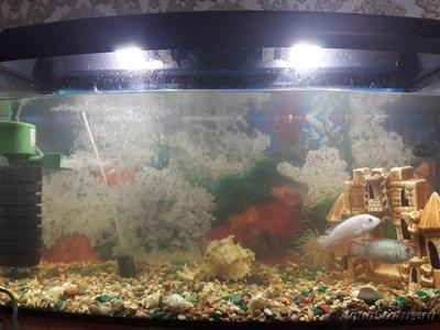 Критические ситуации в аквариуме - как себя вести? - 15553484637542593731249728695123.jpg