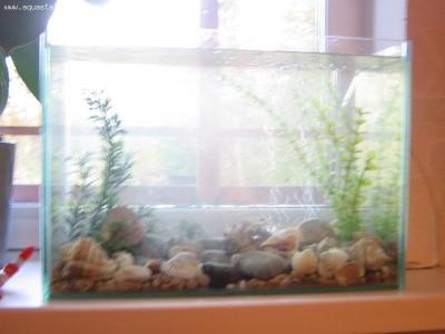 Мой аквариум Рождение нового аквариумиста 20 литров and-majboroda  - IMG_0061.JPG