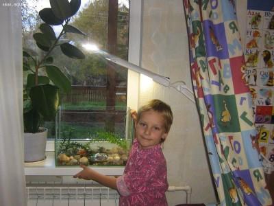 Мой аквариум Рождение нового аквариумиста 20 литров and-majboroda  - IMG_0057.JPG