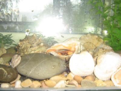 Мой аквариум Рождение нового аквариумиста 20 литров and-majboroda  - IMG_0060.JPG