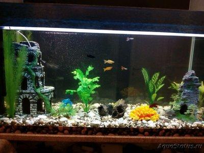 Определение и диагностика болезней у аквариумных рыб - 1556654106715.jpg