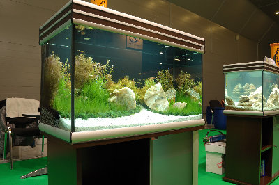 Мой аквариум на конкурсе аквадизайна Зоосфера 150 литров cdda  - DSC_2591.jpg