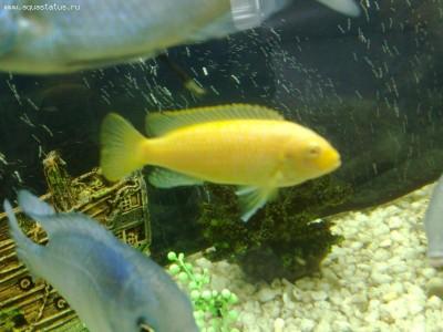 Помогите опознать рыбку опознание рыб  - 14102011415.jpg