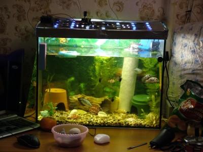 Светодиодное освещение аквариума - DSCF5241.jpg