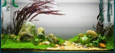 Аквариумные растения - опознание растений. - rockpool.jpg