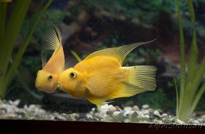 Рыба попугай. Продам. - rO2QVNZXLbg.jpg