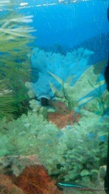 Критические ситуации в аквариуме - как себя вести? - IMG_20190517_083855.jpg