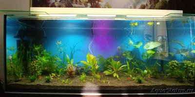 Параметры воды в аквариуме - 20190505_160339_HDR.jpg
