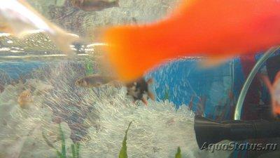 Критические ситуации в аквариуме - как себя вести? - IMG-20190524-WA0002.jpg