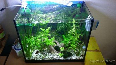 Покровное стекло на аквариум - 20190504_120430_resized.jpg