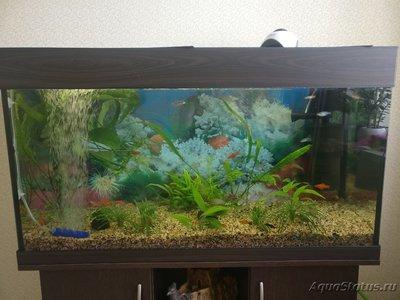 Критические ситуации в аквариуме - как себя вести? - IMG_20190602_110805.jpg