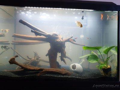 Мутная вода в аквариуме, муть в аквариуме - новый дизайн.jpeg