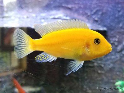 Помогите опознать рыбку опознание рыб  - 20190622_120231.jpg