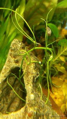 Аквариумные растения - опознание растений. - изображение_viber_2019-06-28_10-12-17.jpg