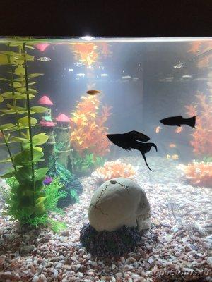 Критические ситуации в аквариуме - как себя вести? - 20DB7B0C-F71F-4F3F-8FF2-84B71351A22C.jpeg