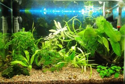 Мой аквариум 35 литров Студентка  - 028.jpg