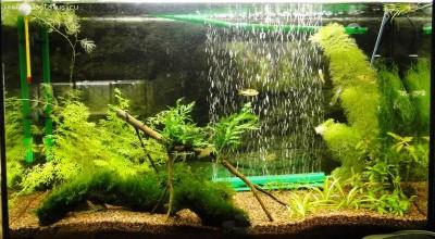 Мой аквариум 100 литров НастенА  - DSC04066.JPG