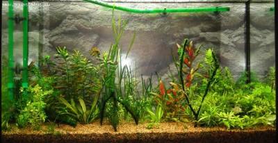 Мой аквариум 100 литров НастенА  - DSC05788.JPG