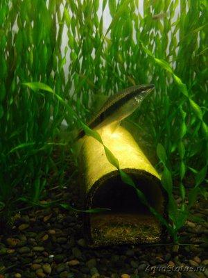 Совместимость рыбок в аквариуме - IMG_20190903_174611.jpg