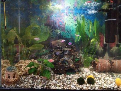 Мой первый аквариум 80 литров. - IMG_20190910_190652.jpg