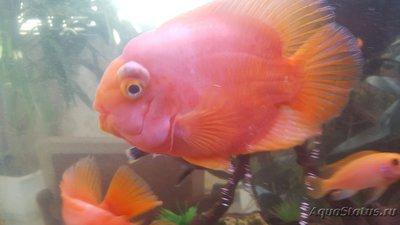 Определение и диагностика болезней у аквариумных рыб - 2.jpg