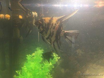 Мутная вода в аквариуме, муть в аквариуме - B5D281D4-6A99-44A0-8C17-31422DE1444A.jpeg