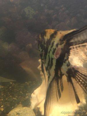 Мутная вода в аквариуме, муть в аквариуме - 049AE8EC-7D49-465B-B903-FC4ED6E64E90.jpeg
