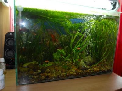 Мой аквариум на 30 литров болик  - 1111111111111111111.jpg