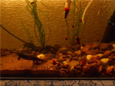 Как часто сифонить грунт в аквариуме 50л? - 222222222222.jpg