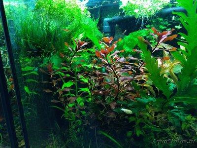 Светодиодное освещение аквариума - IMG_20191024_074830.jpg