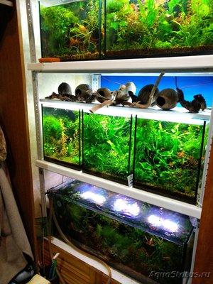 Светодиодное освещение аквариума - IMG_20191024_074745.jpg