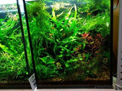 Светодиодное освещение аквариума - IMG_20191024_074702.jpg