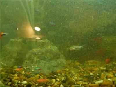 Мой аквариум на 30 литров болик  - 7f3bbca9f874.jpg