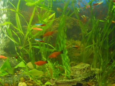 Мой аквариум на 30 литров болик  - 0029e9ee0c5e.jpg