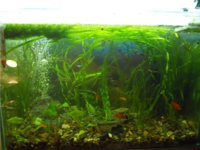 Мой аквариум на 30 литров болик  - 68d5d78fa864.jpg