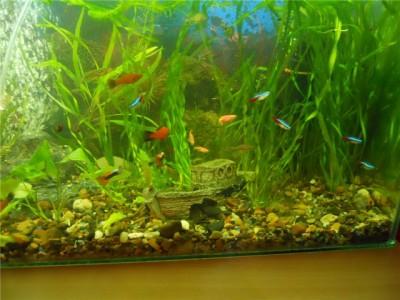 Мой аквариум на 30 литров болик  - e37d0928ad4c.jpg