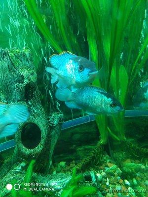 Определение и диагностика болезней у аквариумных рыб - IMG_20191105_194943.jpg