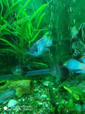 Определение и диагностика болезней у аквариумных рыб - IMG_20191105_194730.jpg
